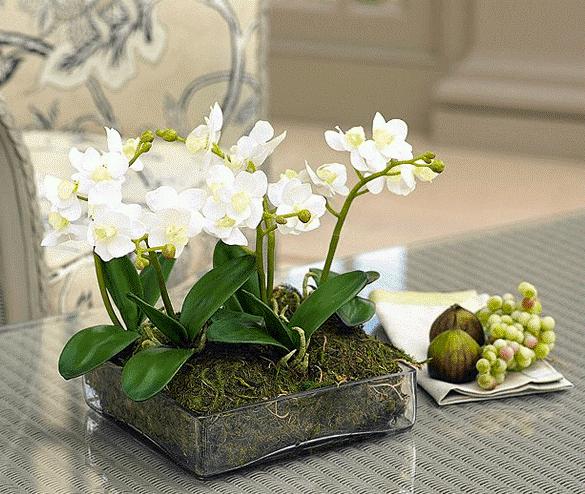 Petite White Orchid