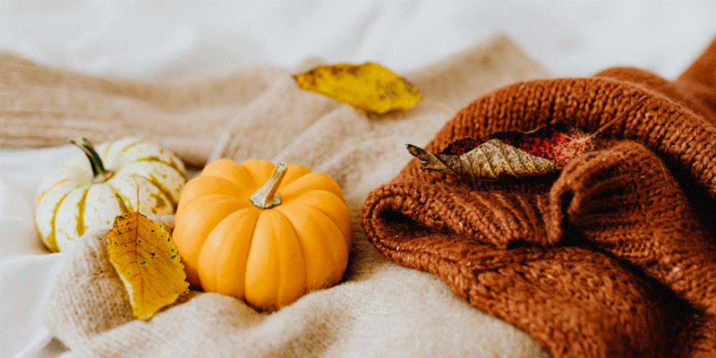 Eco-Friendly Trick or Treat Ideas for Halloween 2021